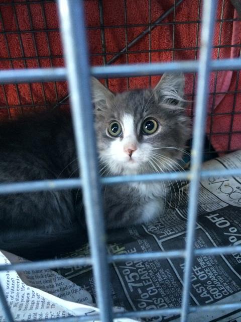 tnr kitty #15