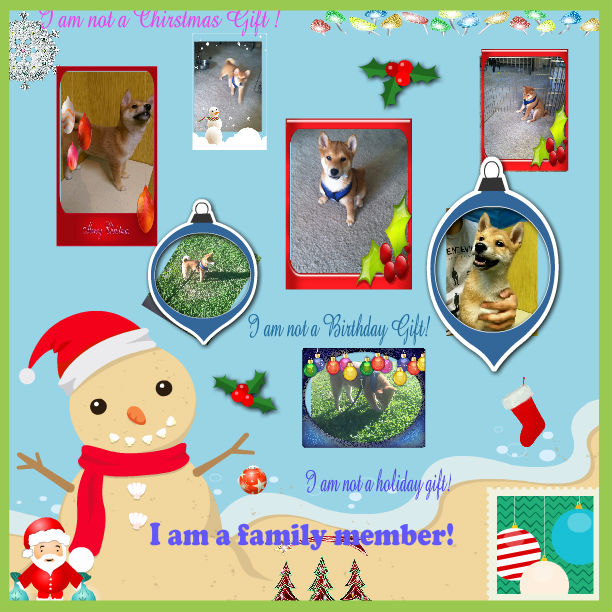 I am not a Holiday Gift I am a Family Member!