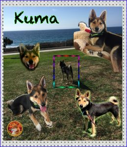 kuma-collage-scsir-logo
