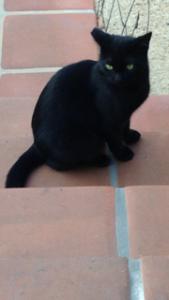 black-kitten-2